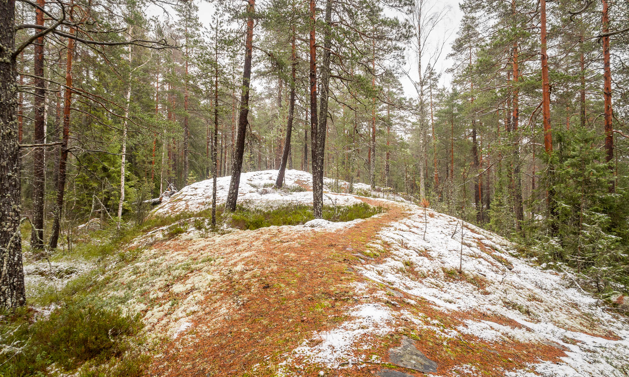 Nuuksio National Park in winter. Finnish nature when there's just a little bit of snow. Nature near Helsinki, Finland.