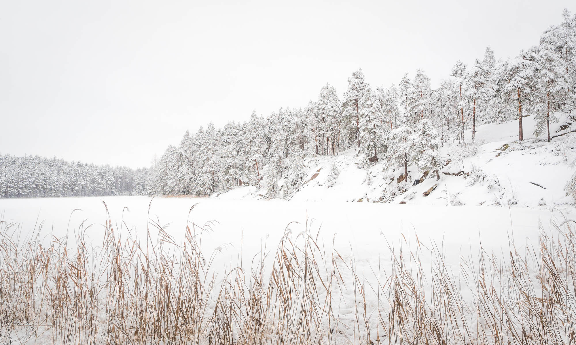 Nuuksio National Park in winter. Christmas week and the forest is all covered in snow, perfect! Finnish nature near Helsinki, Finland.