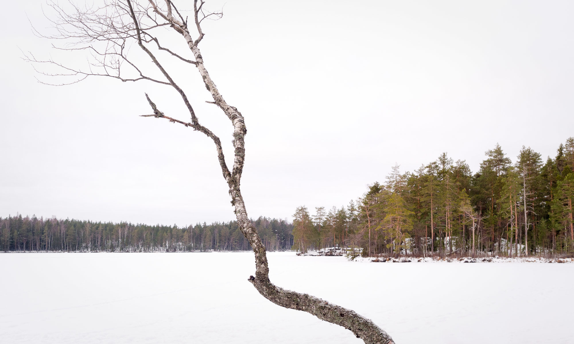Nuuksio National Park in winter. New Year's Day in snowy forest. Finnish nature near Helsinki, Finland.