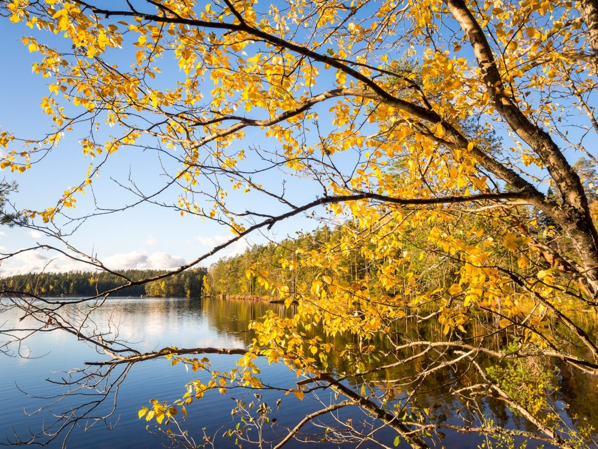 Nuuksio National Park in fall. We get spectacular fall colours here in Southern Finland as well! Nature near Helsinki, Finland.