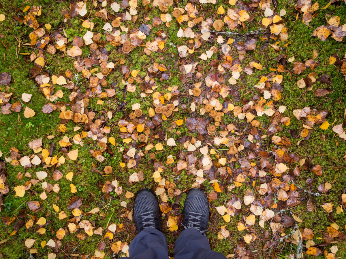 Nuuksio National Park in fall. Find the mushrooms beneath all the fallen leaves. Nature near Helsinki, Finland.