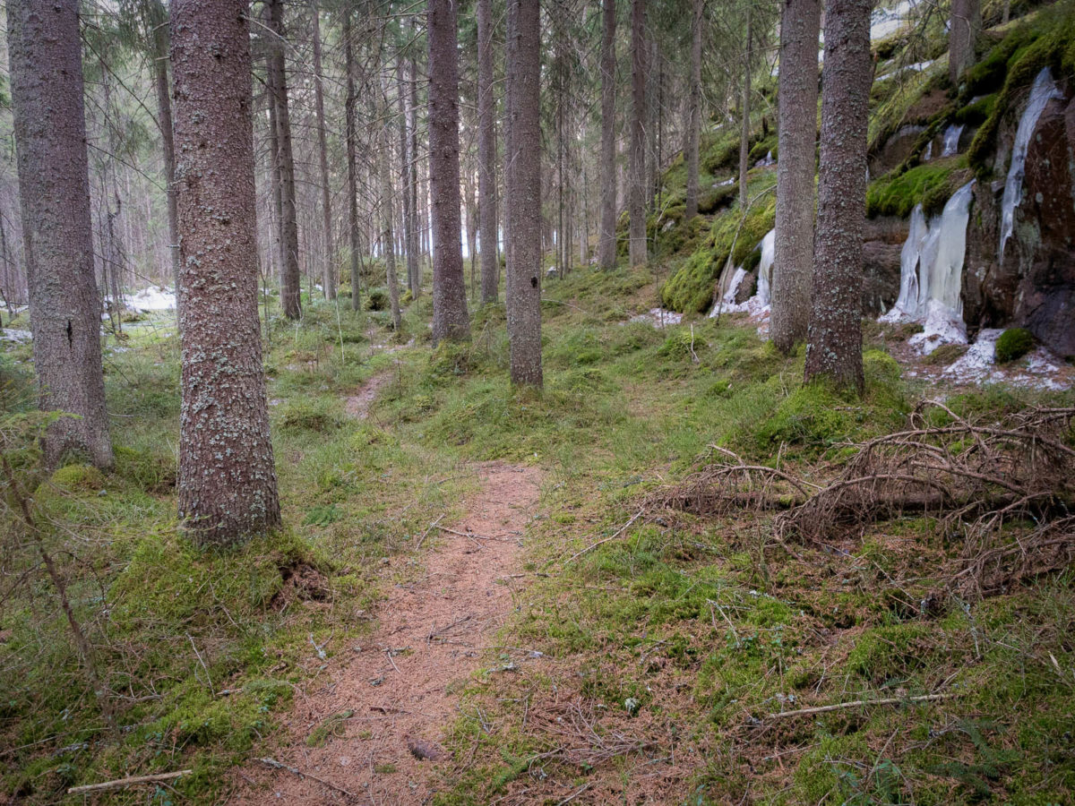 Nuuksio National Park in spring, in April. Small trails are either completely dry or very wet in some places. Finnish nature near Helsinki, Finland.