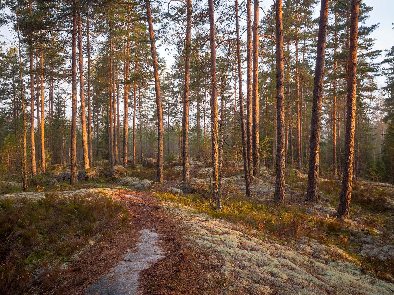 Nuuksio National Park in spring. Trails are free of snow in April. Nature near Helsinki, Finland.