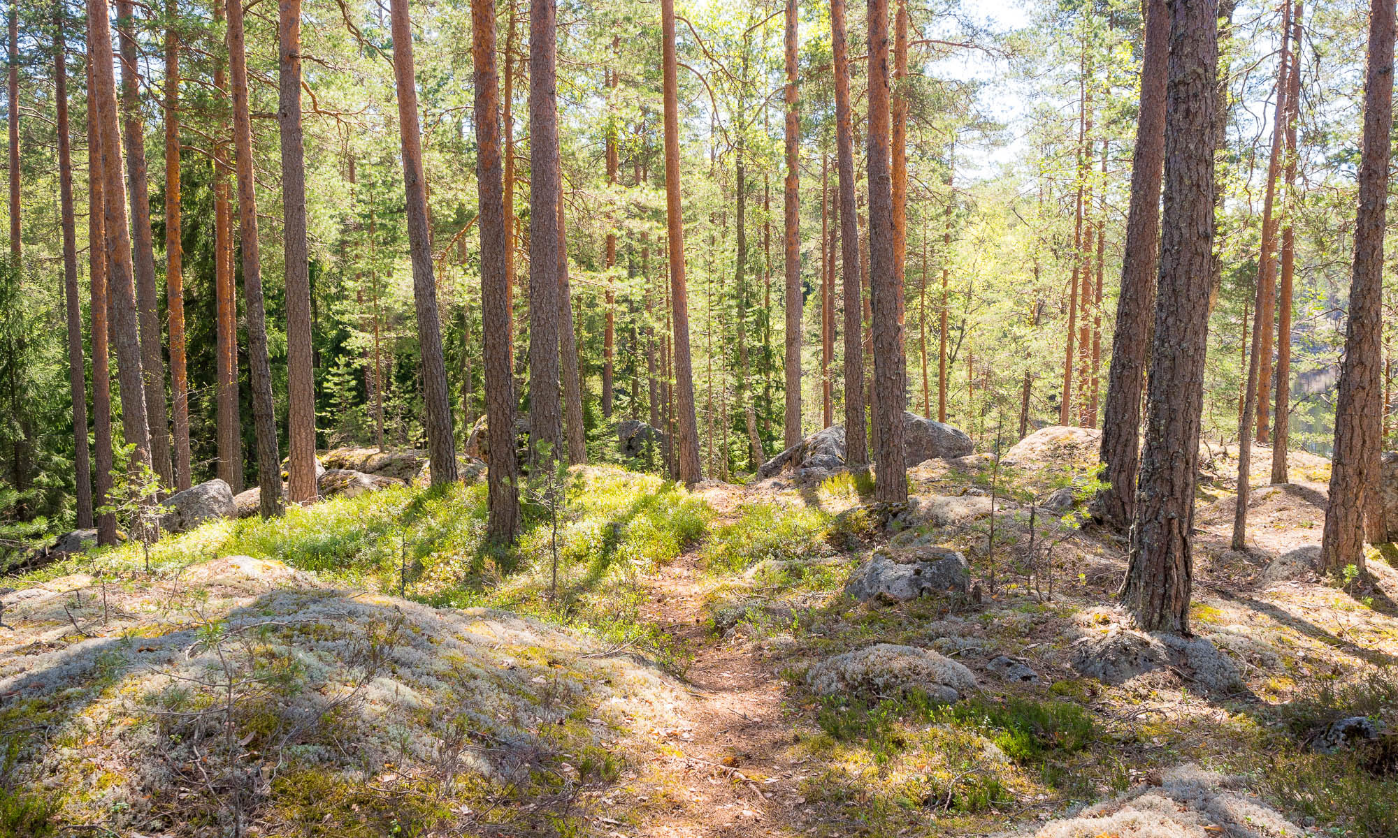 Nuuksio National Park in spring. Amazing weather and quiet trails in May. Nature near Helsinki, Finland.