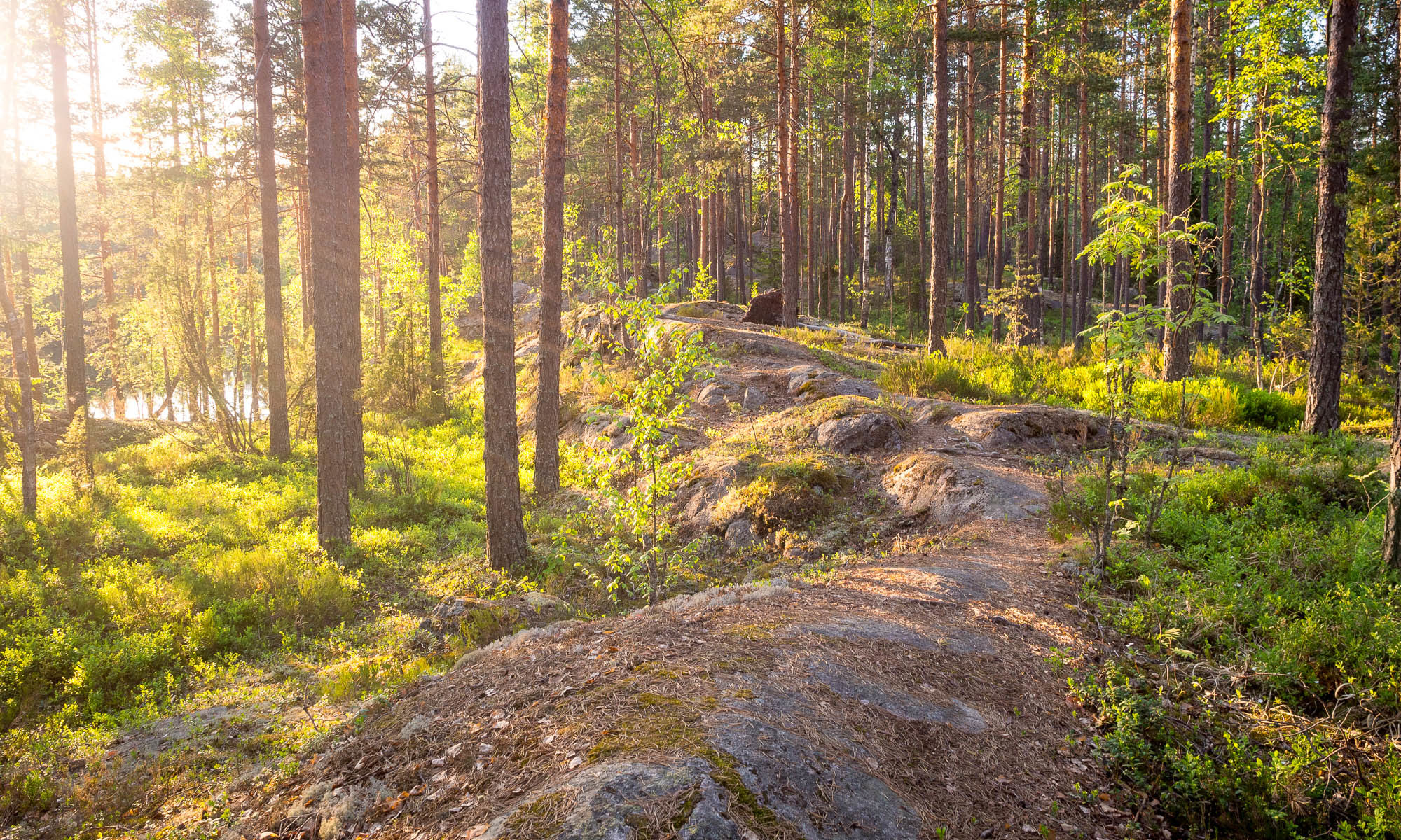 Nuuksio National Park in summer. Peaceful evening at the end of May, the beginning of summer. Nature near Helsinki, Finland.
