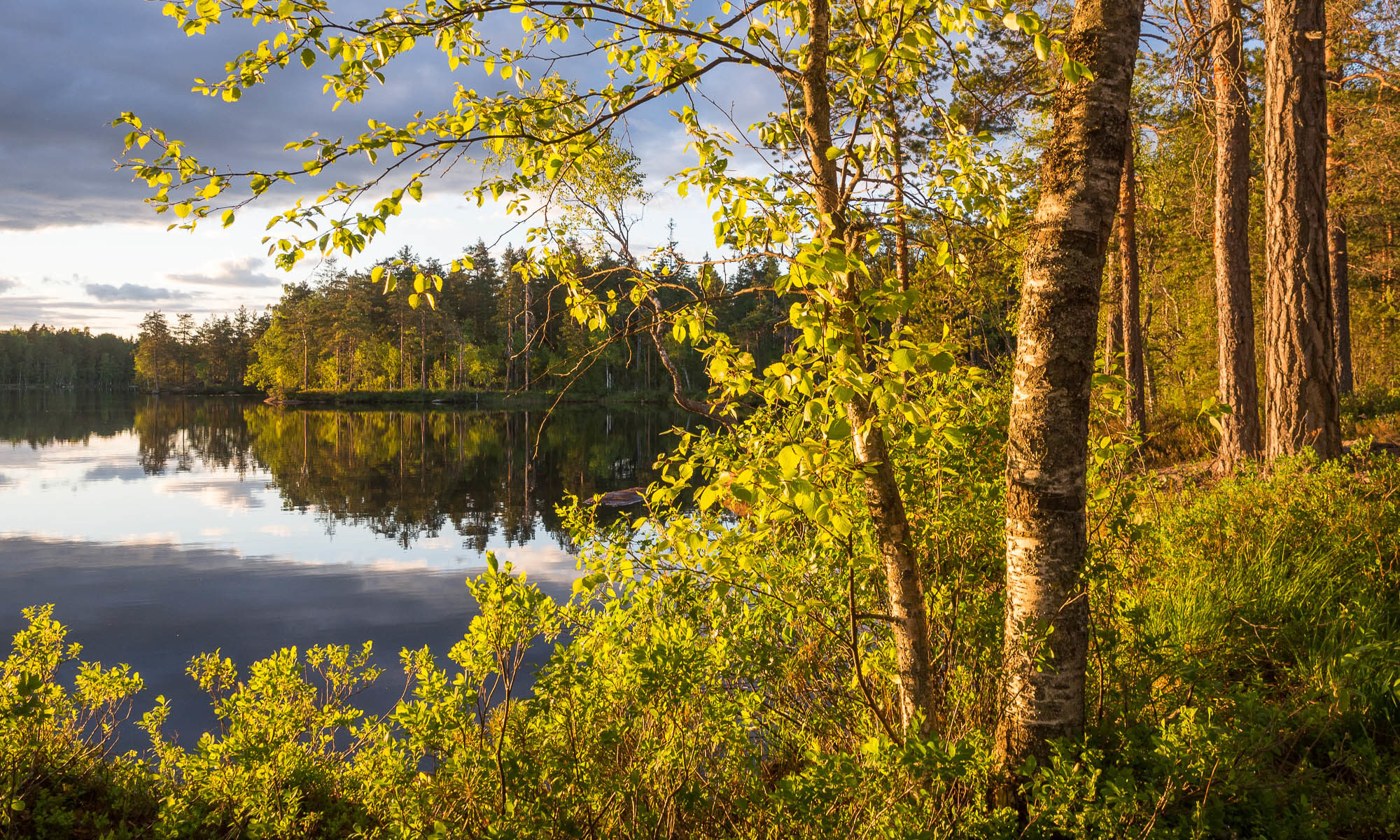 Nuuksio National Park in summer. Beautiful summer evening at a calm lake. Nature near Helsinki, Finland.