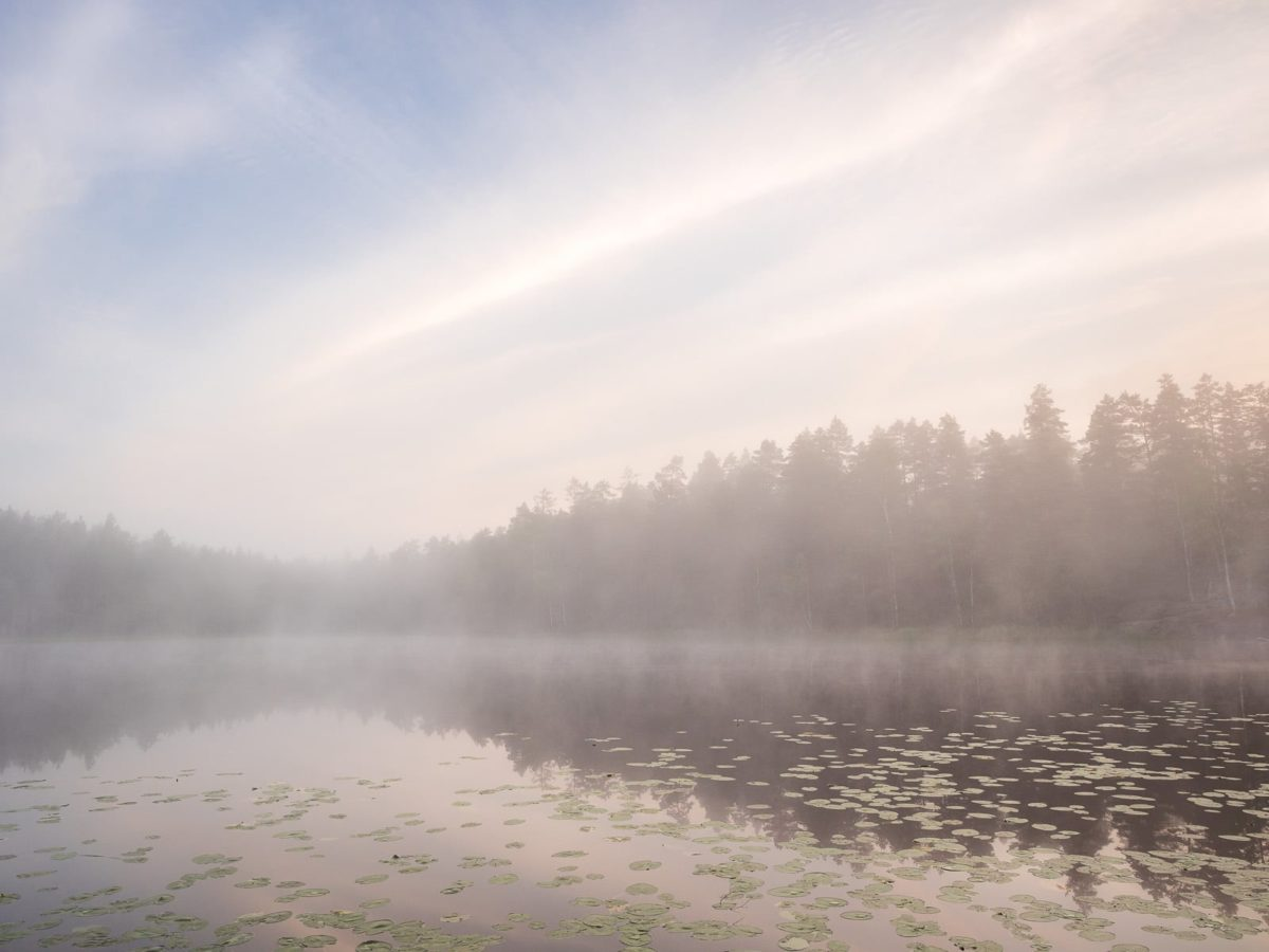 Nuuksio National Park in summer. Mist rises from a lake as the sun rises after a cool night in August. Nature near Helsinki, Finland.