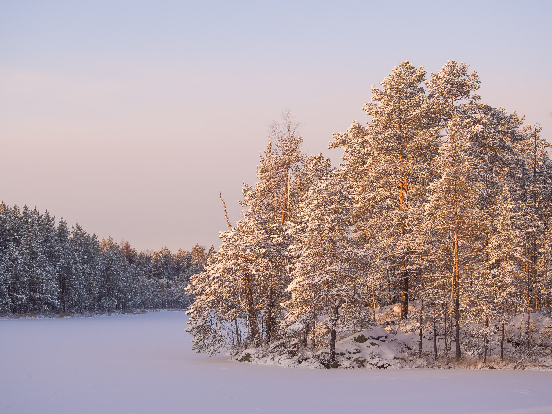 The amazing beauty and peacefulness of a Finnish forest in Nuuksio National Park, when all the trees are covered in snow. Nature near Helsinki, Finland.