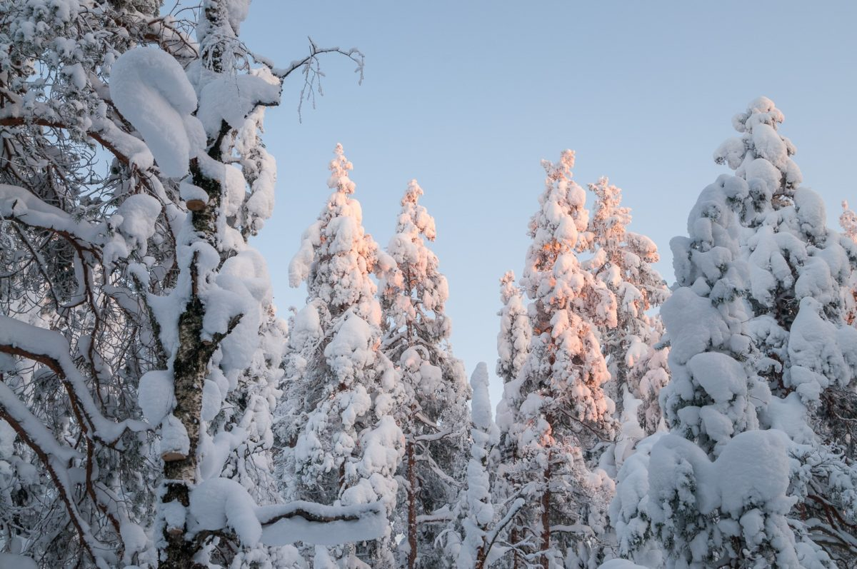 Nuuksio National Park in winter. Lots of snow and a silent forest in February. Nature near Helsinki, Finland.