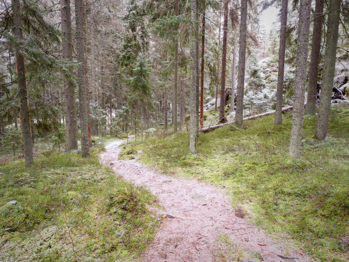 Nuuksio National Park in winter. Snow has fallen on the quiet trails. Nature near Helsinki, Finland.