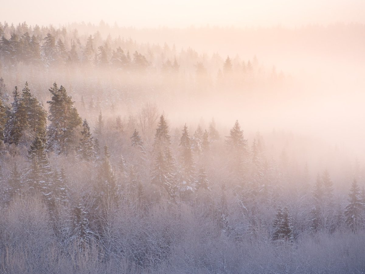 Nuuksio National Park in winter. A very cold December morning with mist floating at the bottom of a valley. Nature near Helsinki, Finland.