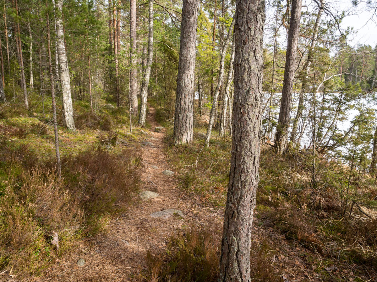 Nuuksio National Park at the end of winter and beginning of spring. Dry trails at the end of March. Finnish nature near Helsinki, Finland.