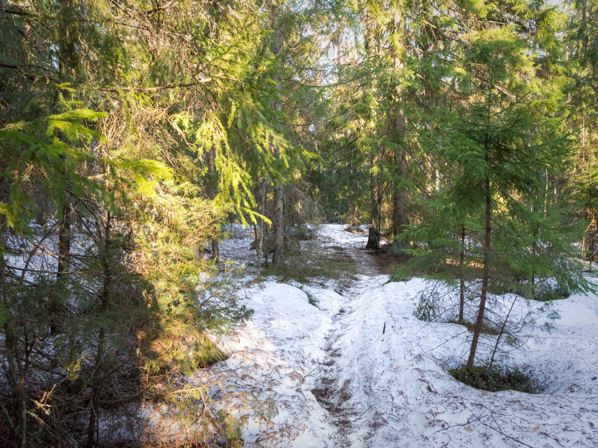 Nuuksio National Park at the end of winter and beginning of spring. Snowy trails at the end of March. Finnish nature near Helsinki, Finland.